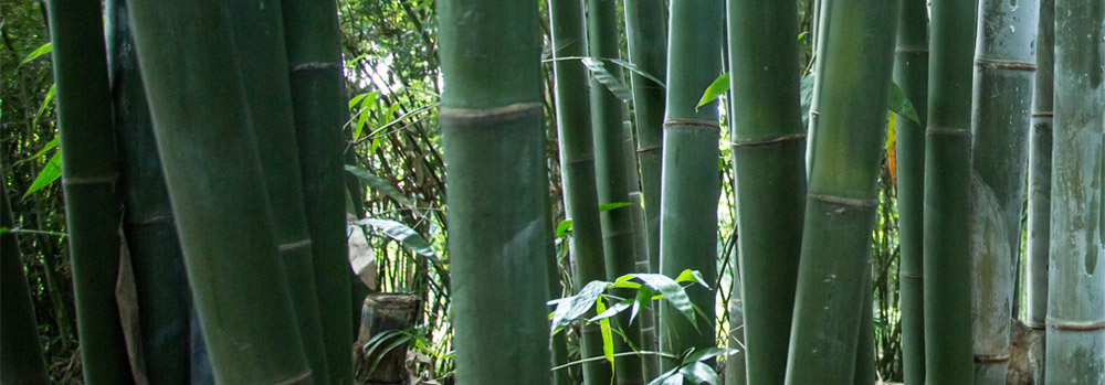 bamboo sustainability